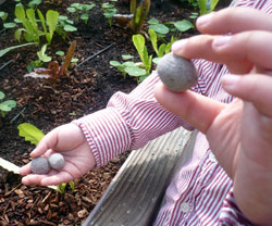 Holding Seed Globes